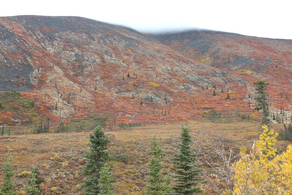 Autumn on the tundra north of Whitehorse in the Ogilvie Mountains.