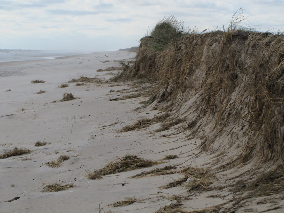 Damage to dune at Amagansett National Wildlife Refuge (NY)