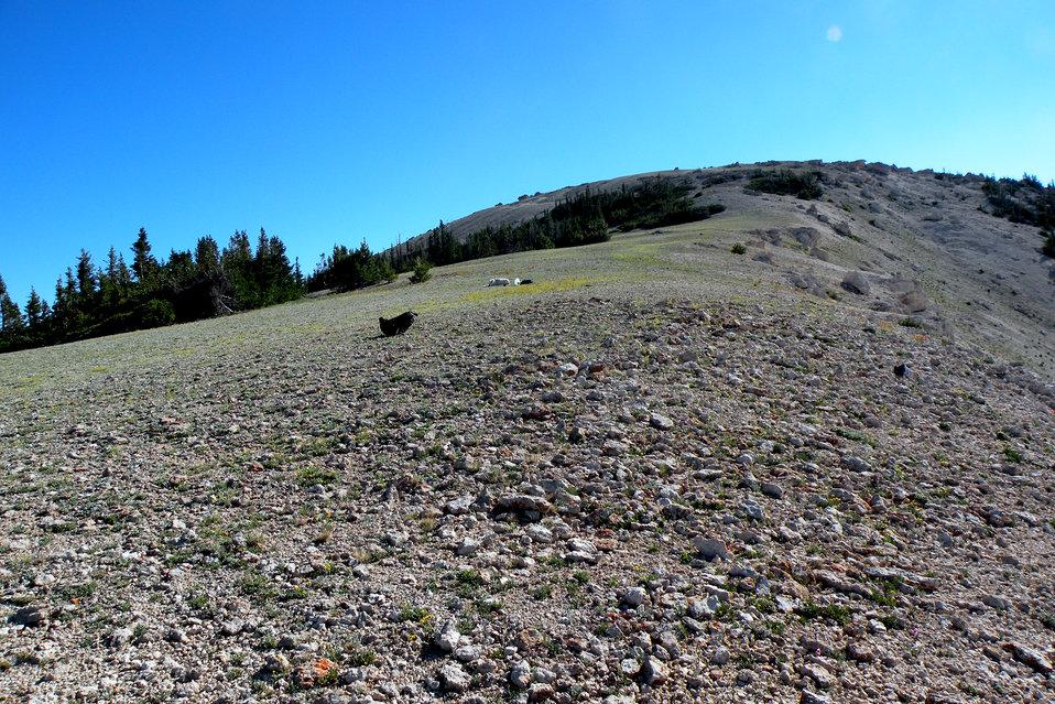 Heliotrope milkvetch habitat (Astragalus montii)