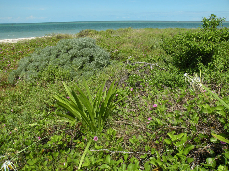 Key West National Wildlife Refuge, FL