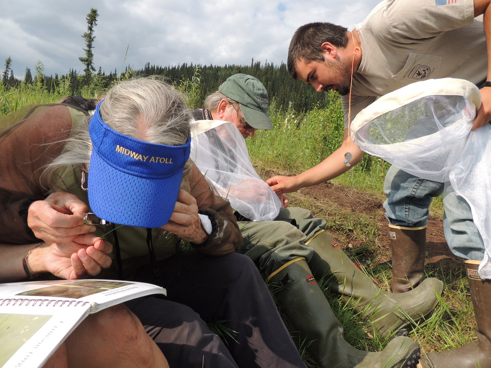 Identifying dragonflies