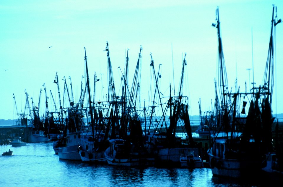 Part of the shrimp fleet near Charleston.