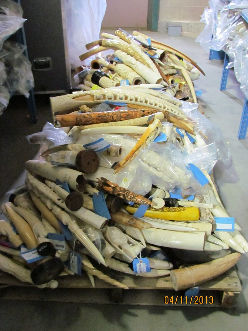 Pallet of raw, polished and carved tusks