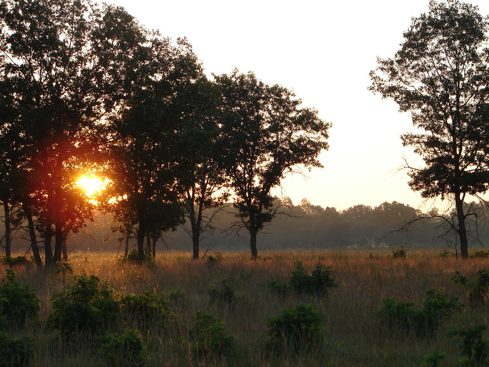 Necedah evening savanna