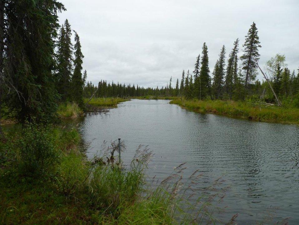 Spruce Vortex site