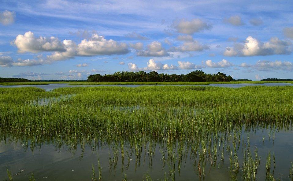 Pinckney Island NWR