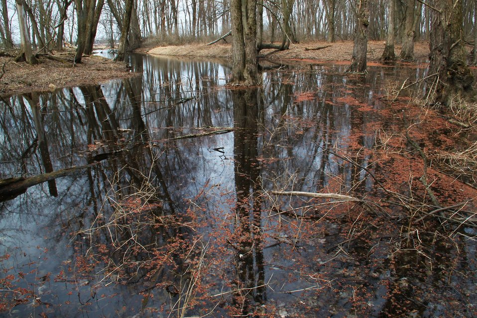 Forested Wetlands