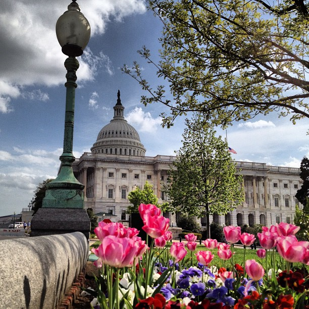 Red, white and blue in bloom on Capitol grounds.