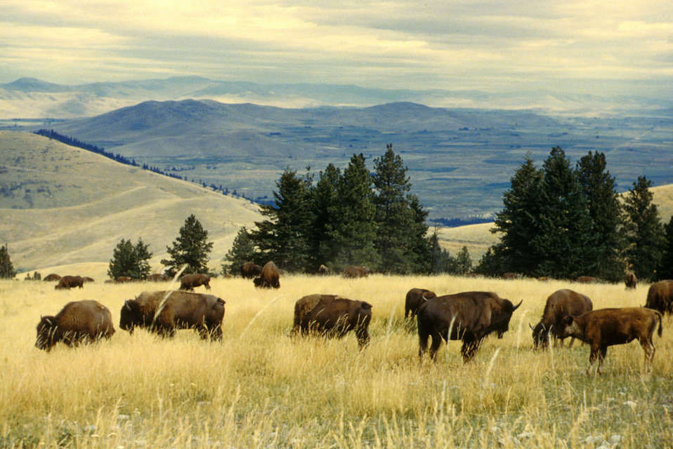 National Bison Range scenic2