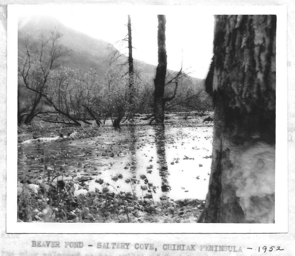 (1953) Beaver Pond