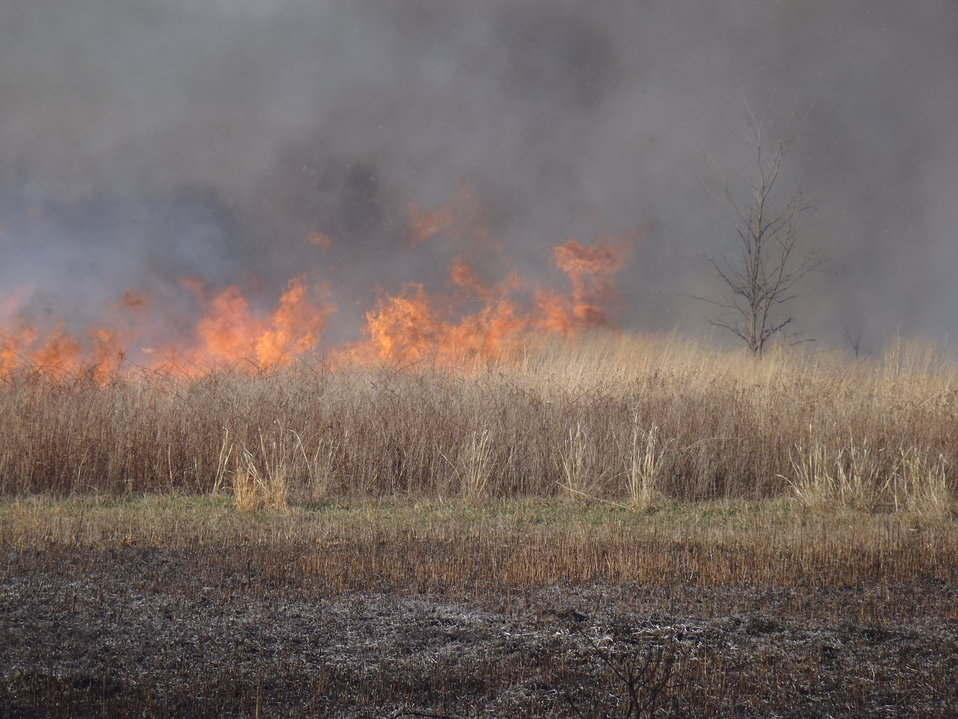 Fire Management in the Tall-grass Prairie