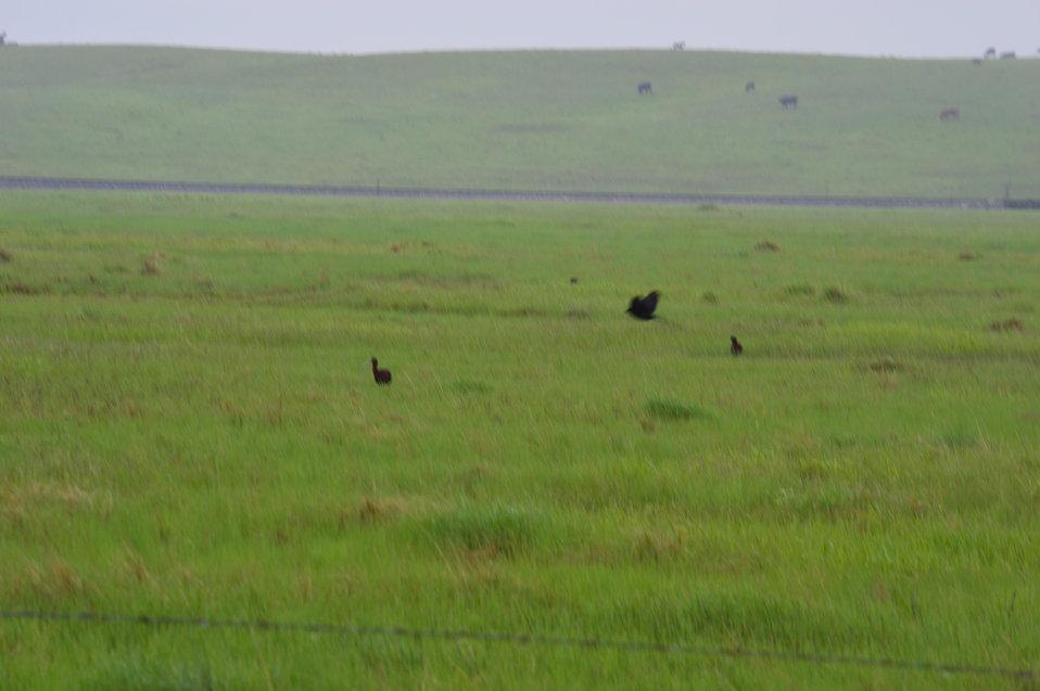Prairie of Lost Lake NWR