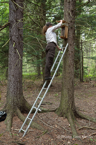 Refuge Biologist Checks Flying Squirrel Box