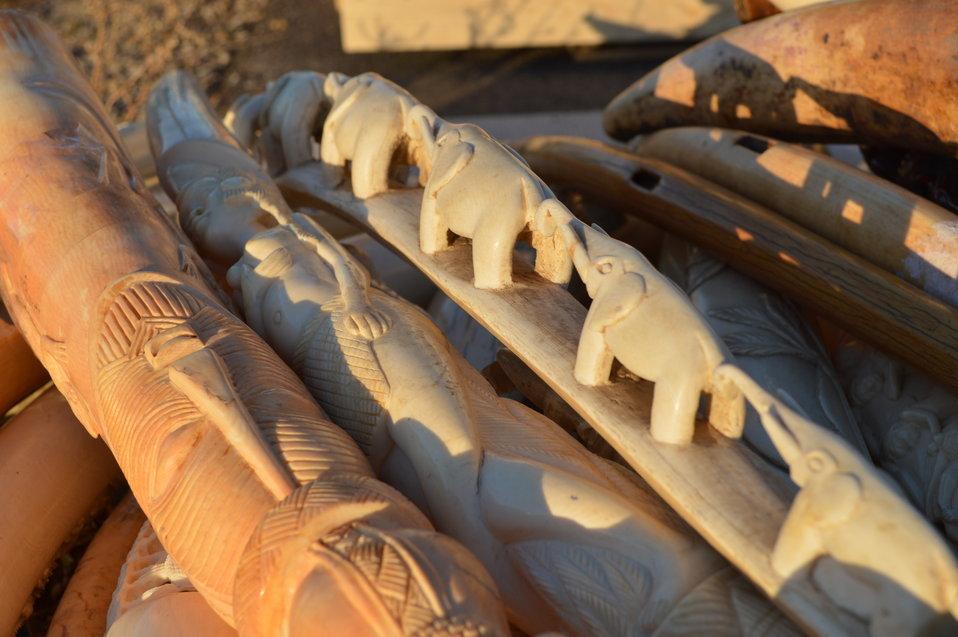 Ivory in Morning Light 2