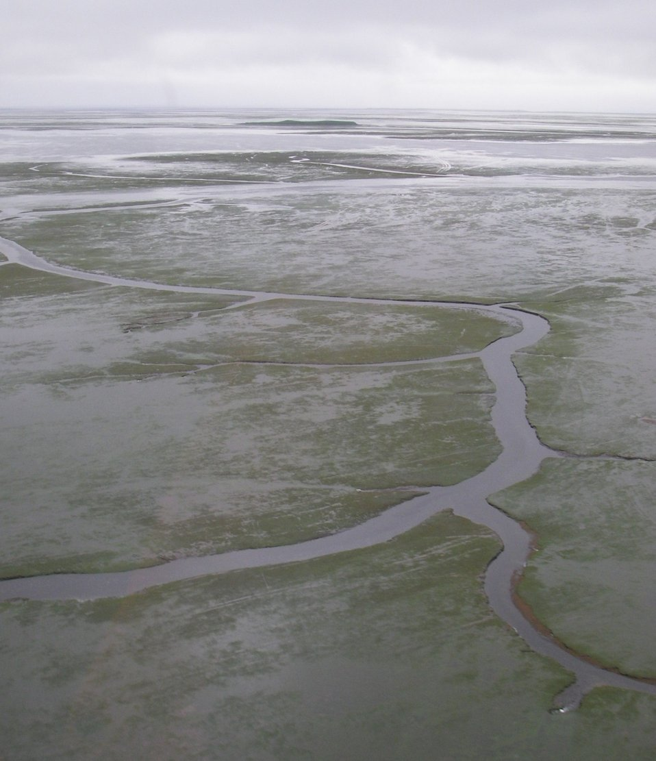 Channels in eelgrass beds