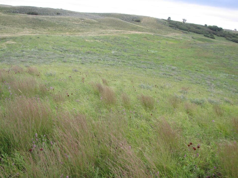 Landscape Sullys Hill National Game Preserve Fort Totten, North Dakota