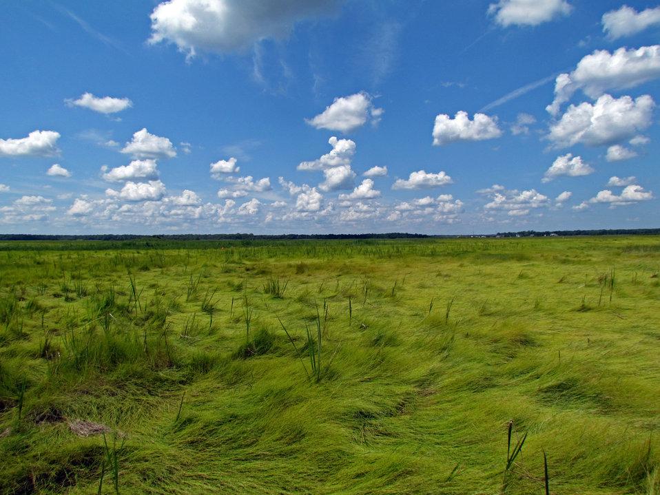Wilderness area on Mullica River