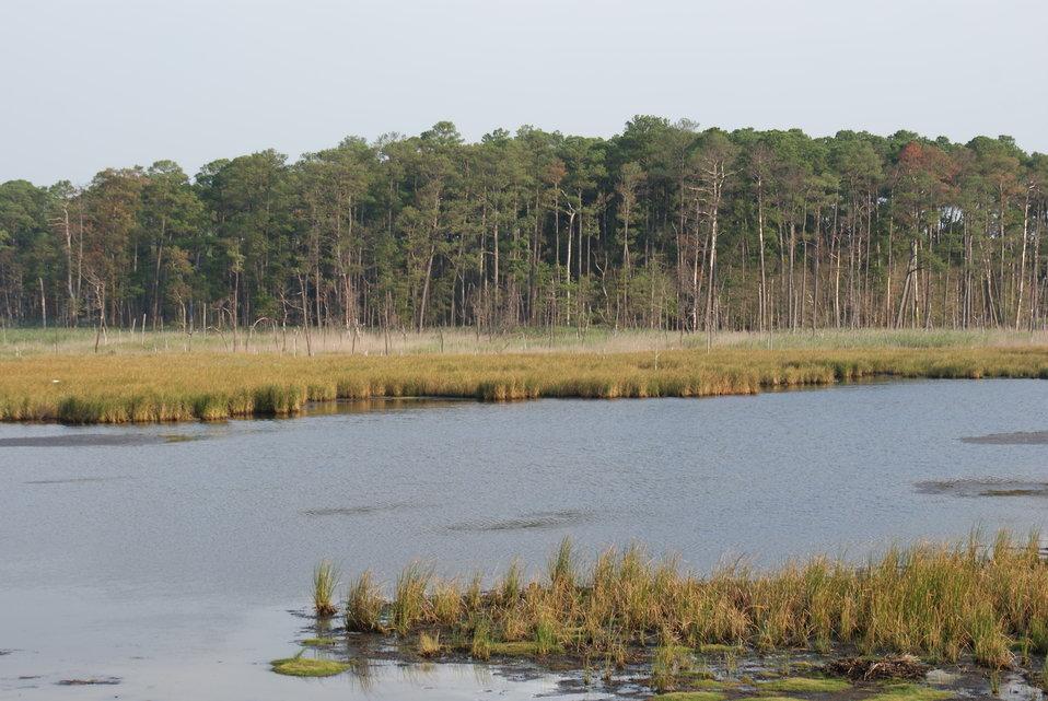 Blackwater National Wildlife Refuge