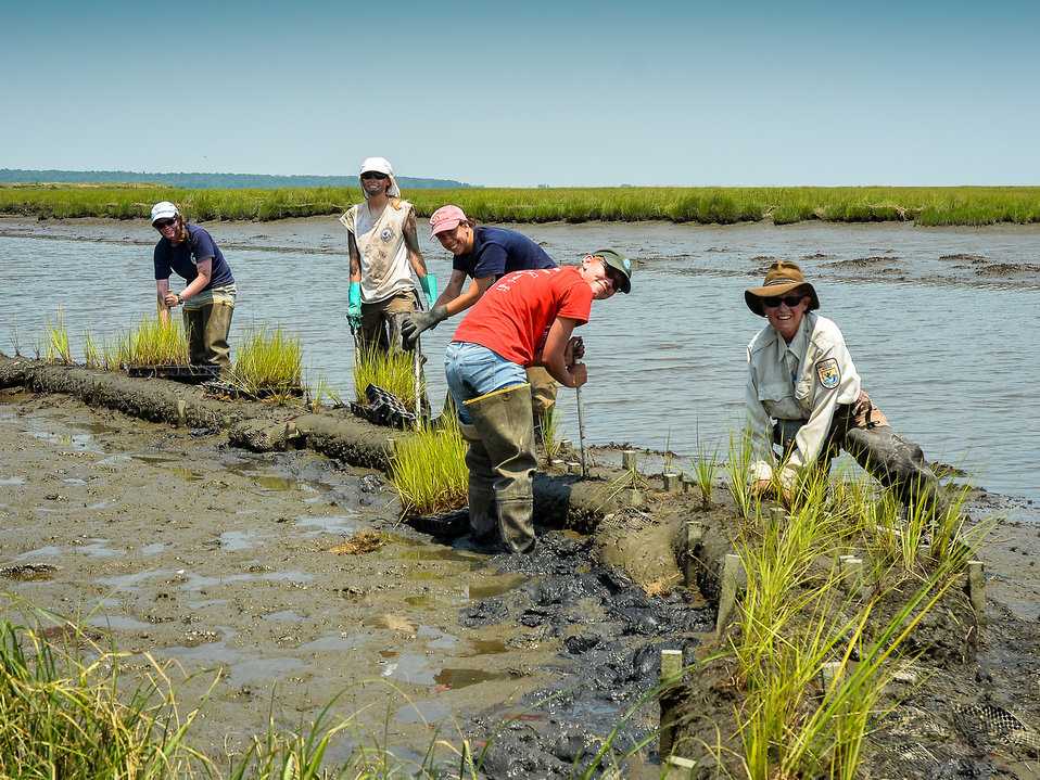 Restoring Tidal Marsh