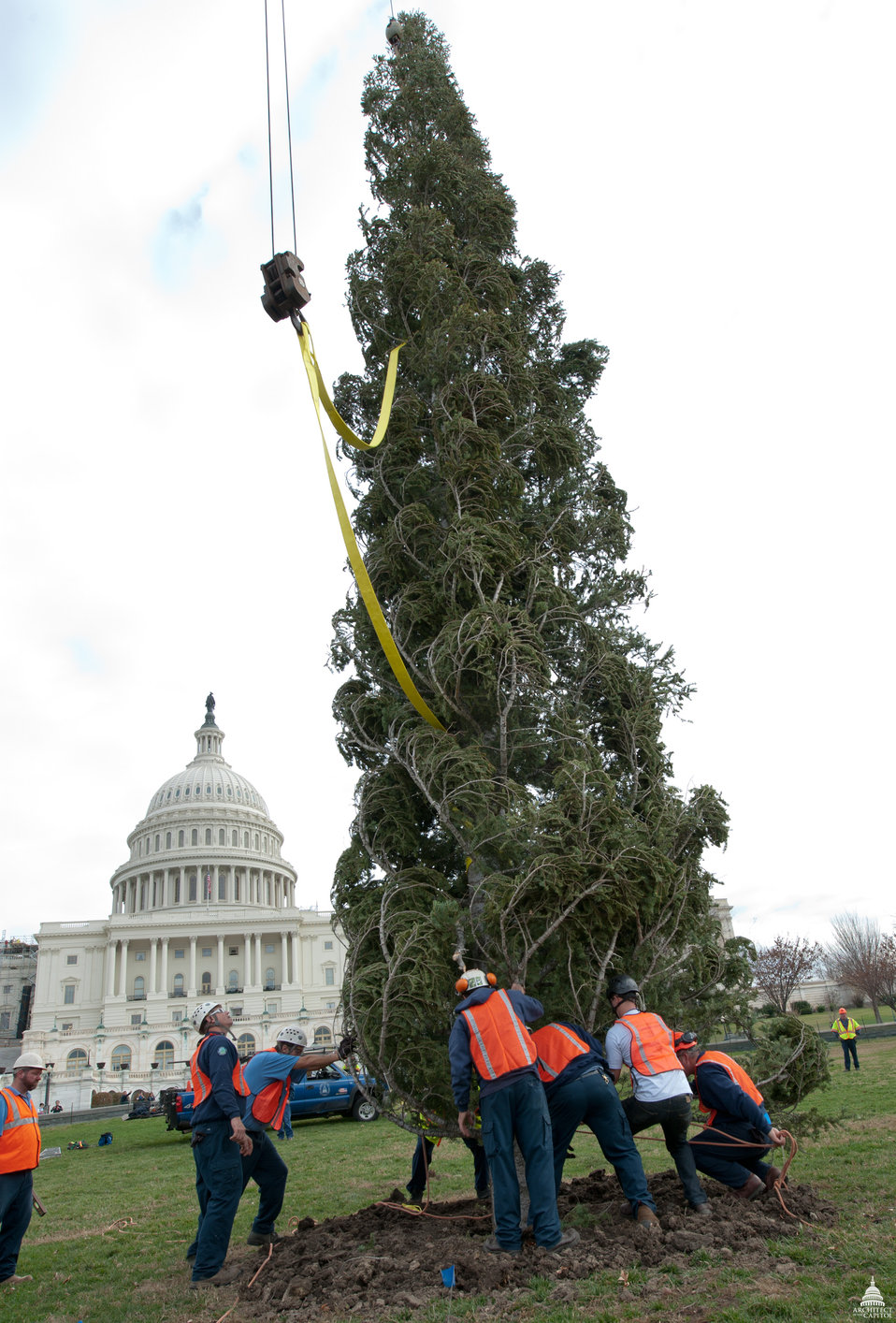 Christmas Tree Arrives as the U.S. Capitol