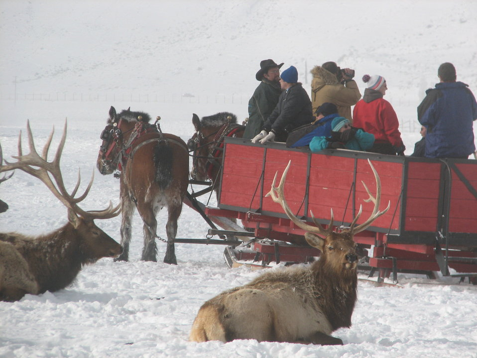 Sleigh Rides Provide Up-Close Elk Viewing Opportunities
