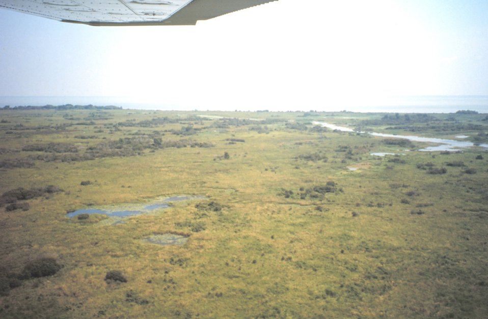 Aerial view of freshwater wetlands.  Freshwater wetlands support a higher diversity of plants than do salt marshes.