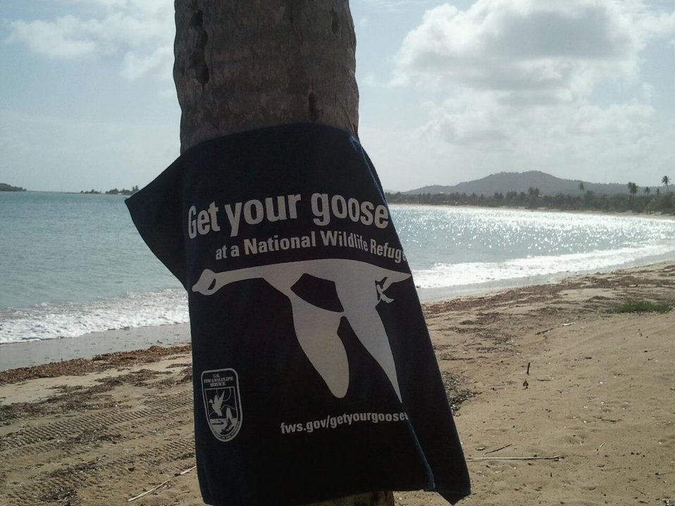 Get Your Goose On! at Vieques National Wildlife Refuge's Secret Beach
