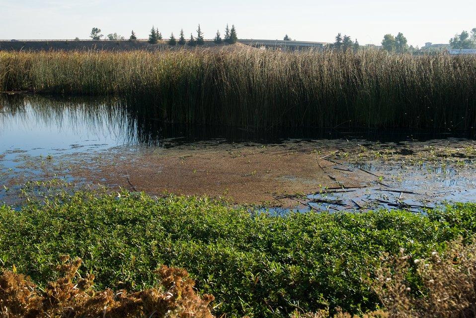 Stone Lakes National Wildlife Refuge water
