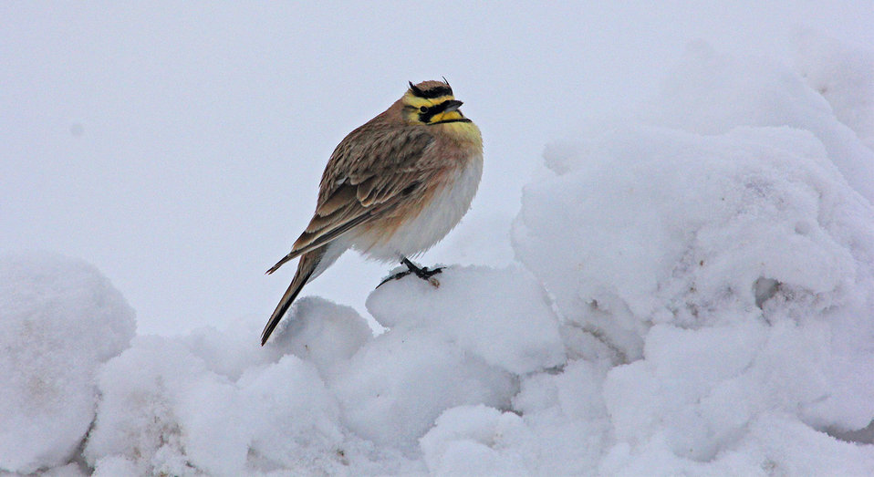 A Cold Perch