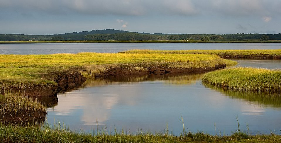 salt marsh in August
