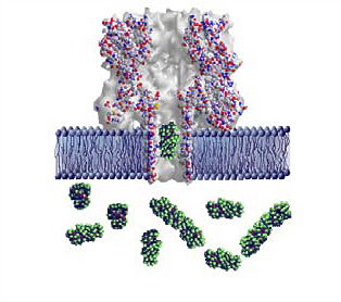 DNA; Nanoscale Pores