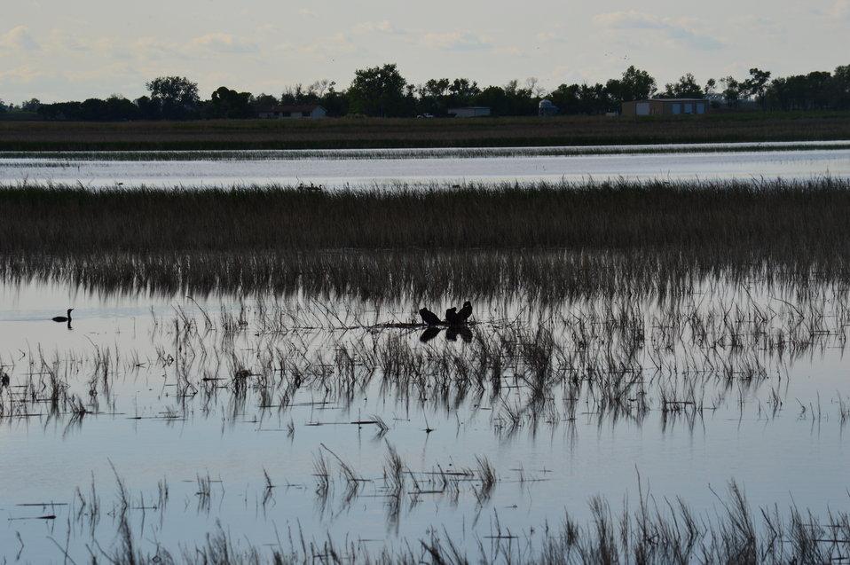 Waterfowl at Sand Lake