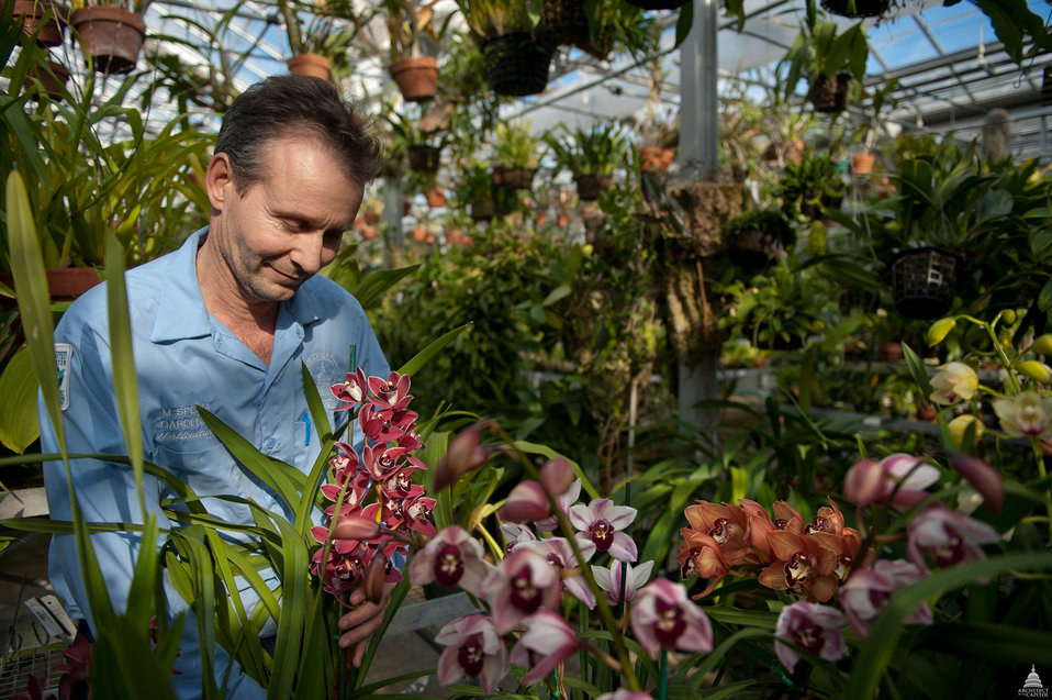 Caring for Orchids at the U.S. Botanic Garden