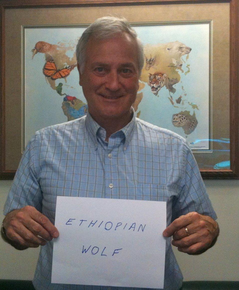 Herb Raffaele, 'Ethiopian Wolf,' Credit: USFWS