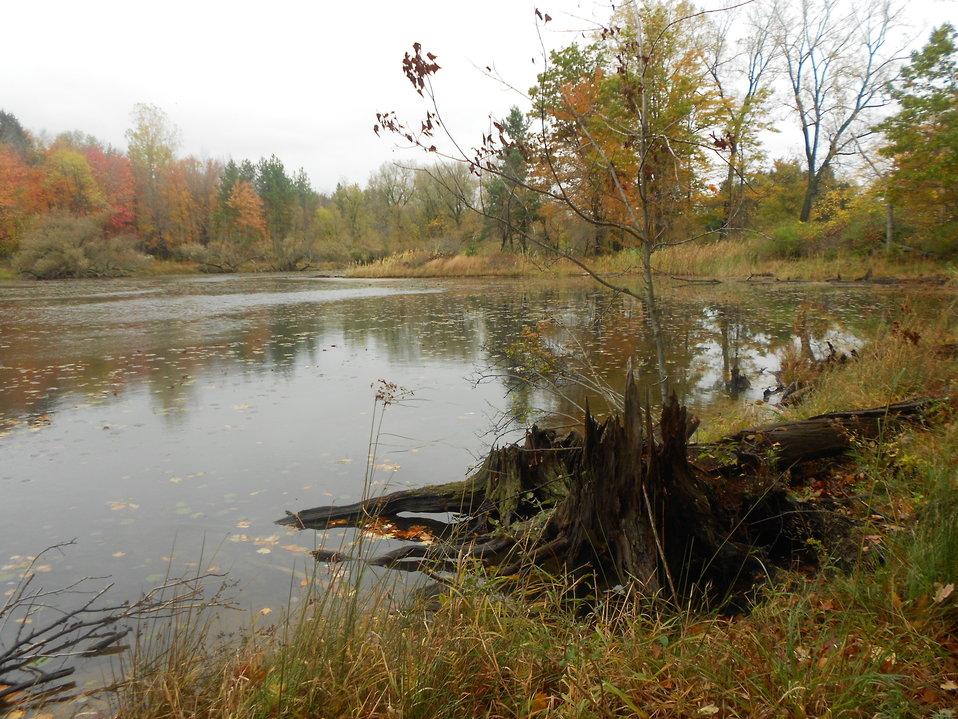 Pond at Reinstein Woods Nature Preserve