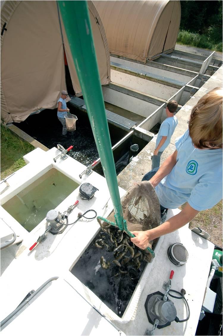 Week 8, Final Week, Creston National Fish Hatchery, Creston, MT