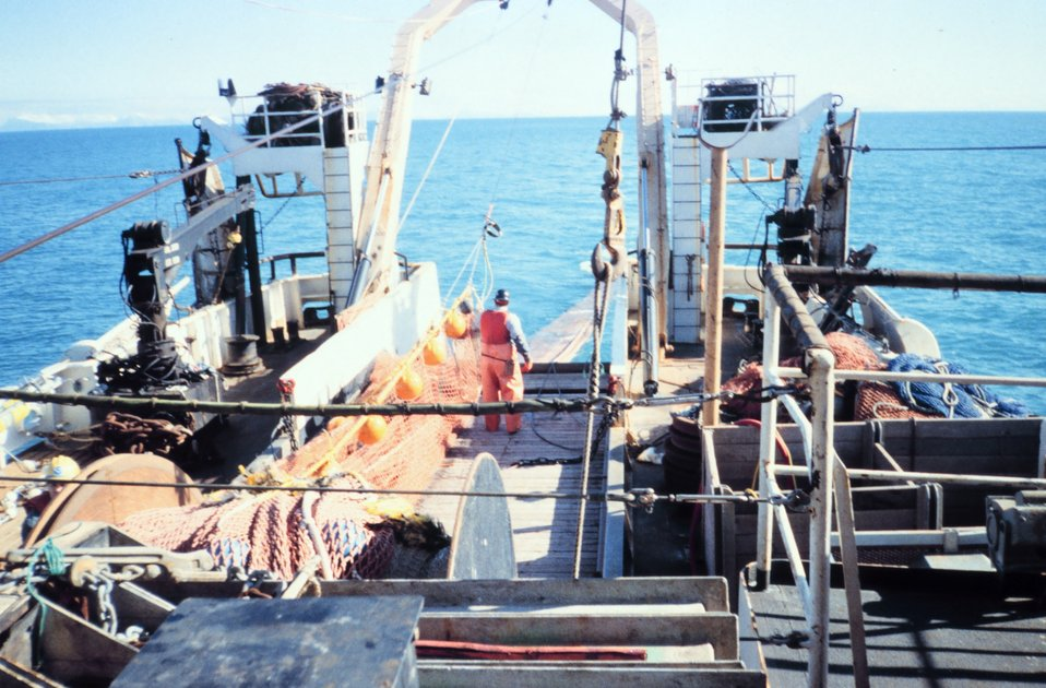 Photo # 1 - Streaming net during  trawling operations.  Yellow floats are pulled underwater but help keep the mouth of the net open while being towed.
