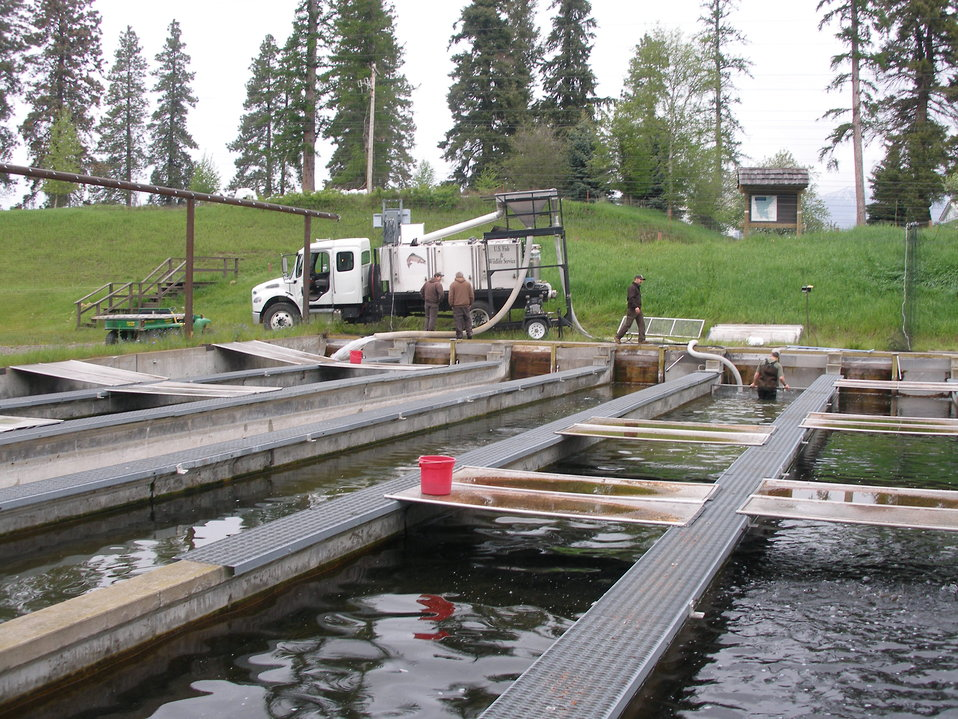 Loading Fish into Distribution Truck