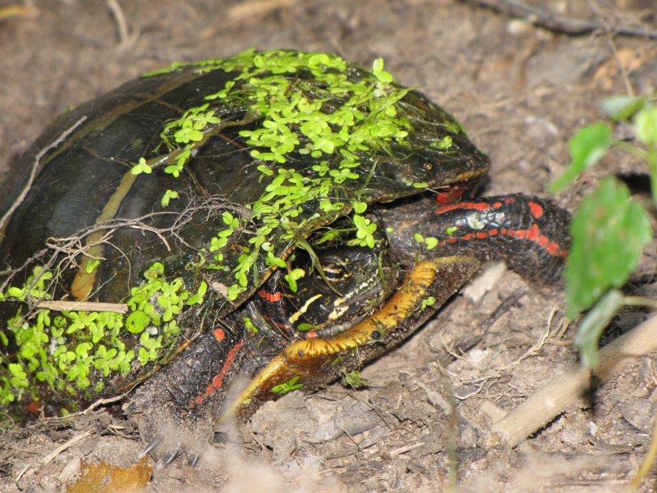 Mattaponi Wildlife Management Area, Virginia