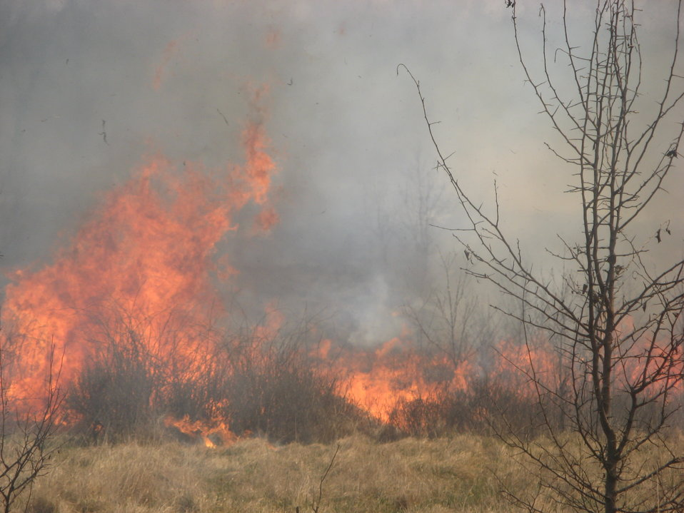 Controlled burn in grassland