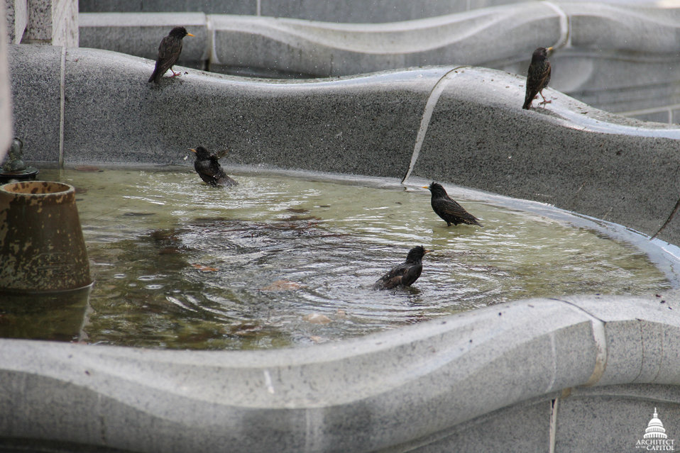 Birds in Senate Fountain