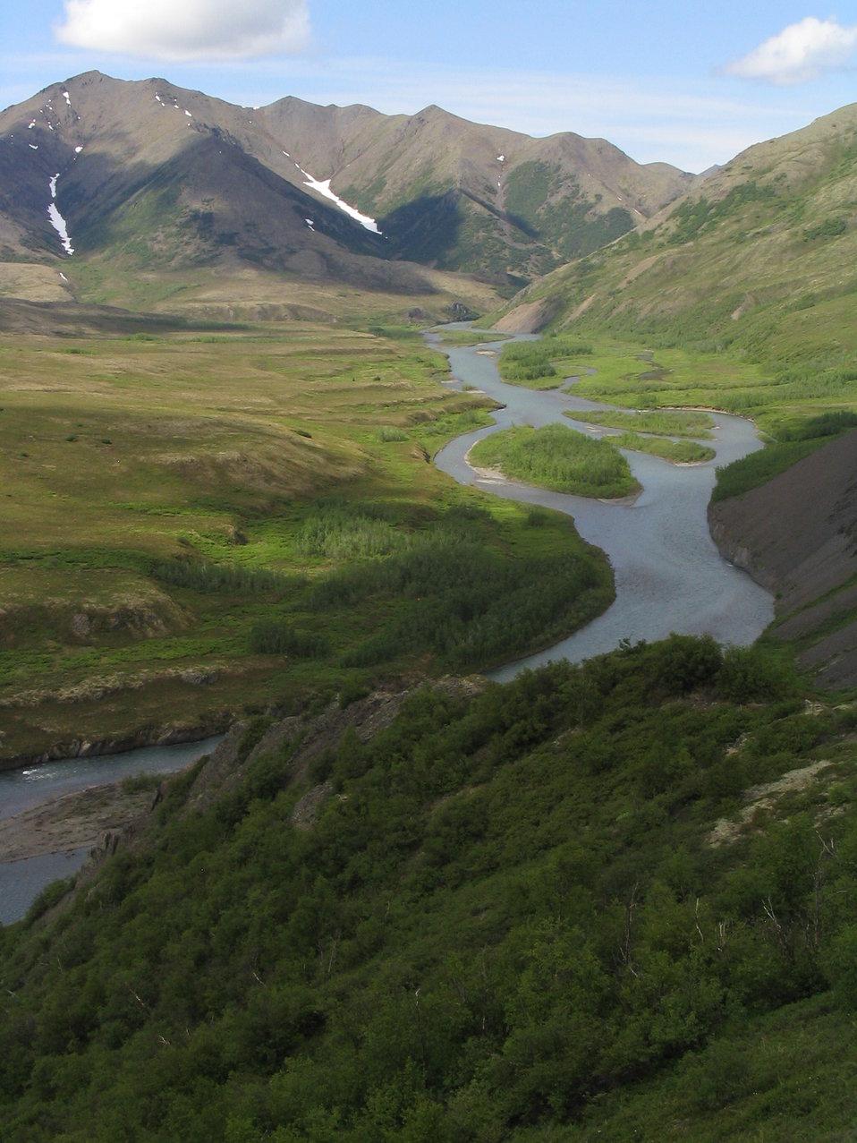 Gyrfalcon habitat