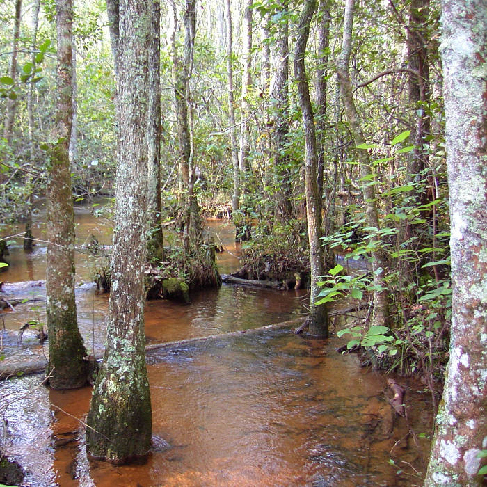 Coastal Plain stream, Georgia