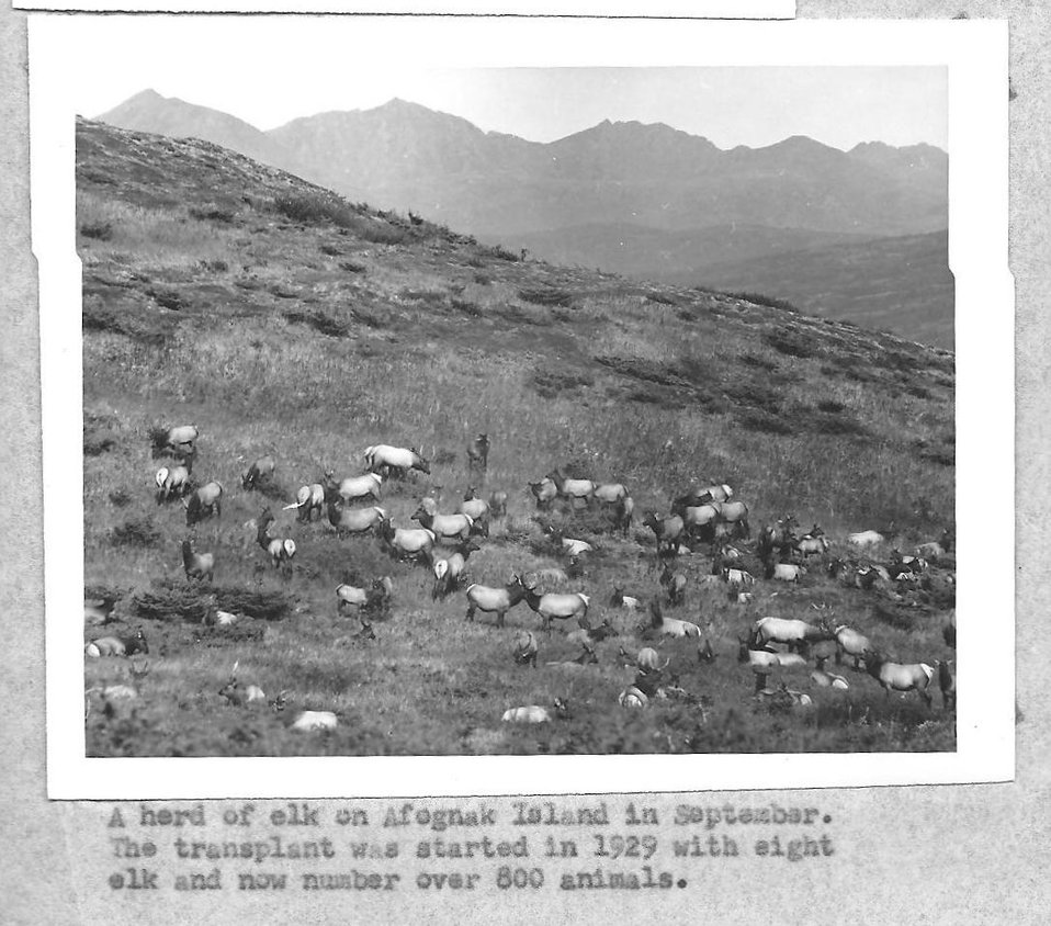 (1958) Herd of Elk