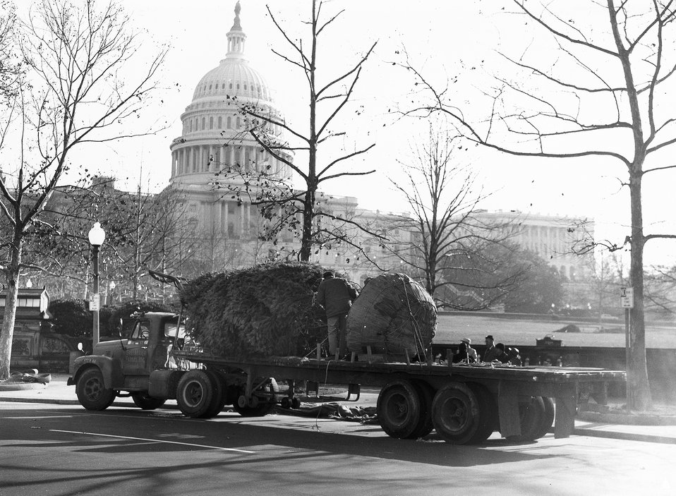 U.S. Capitol Christmas Tree - 1964