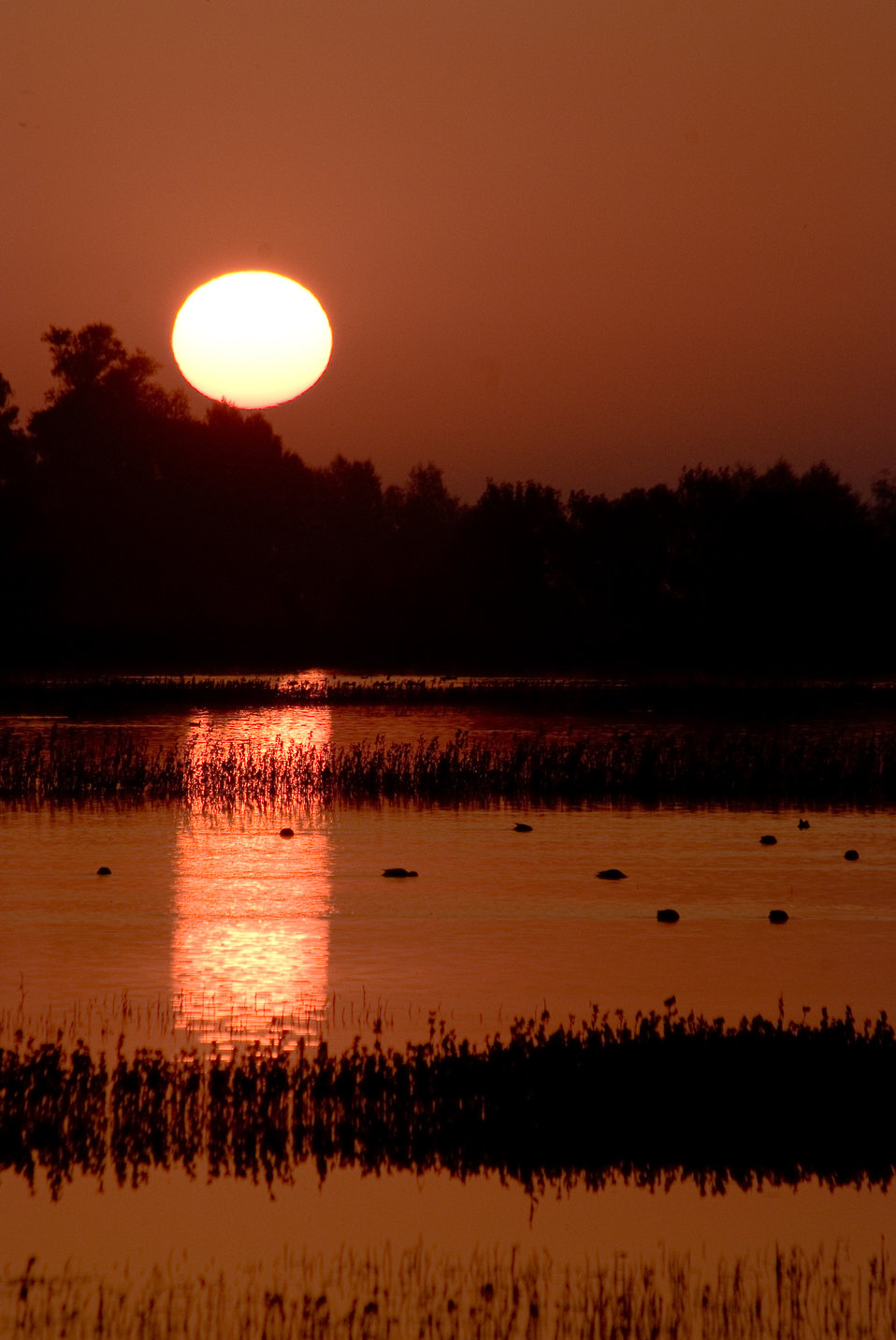Orange sunset at Sacramento National Wildlife Refugeo