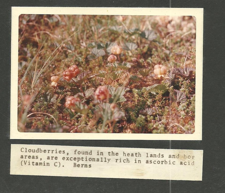 (1971) Cloudberries