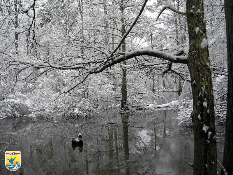 Little River National Wildlife Refuge in winter