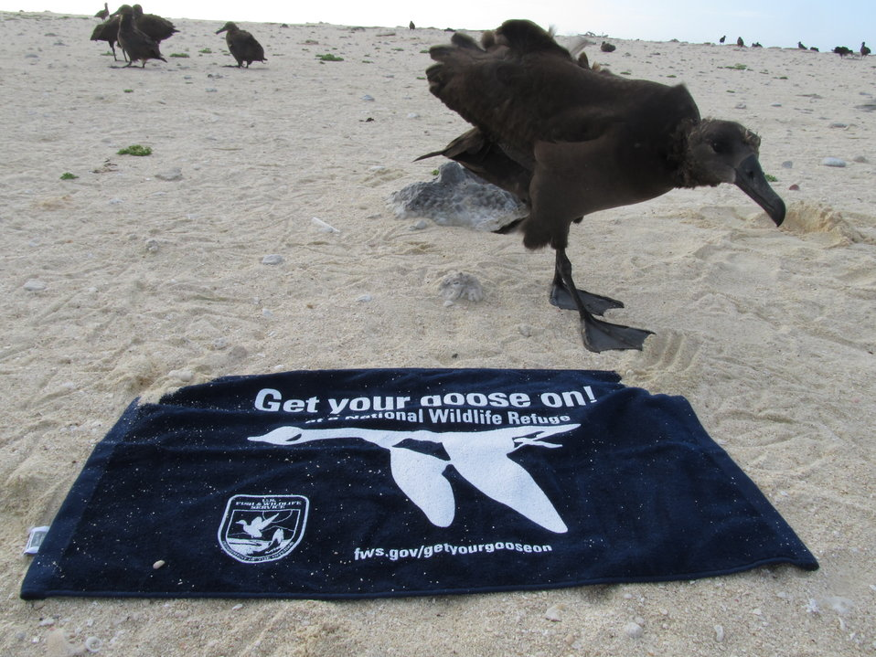 Get Your Goose On! - Albatross Style