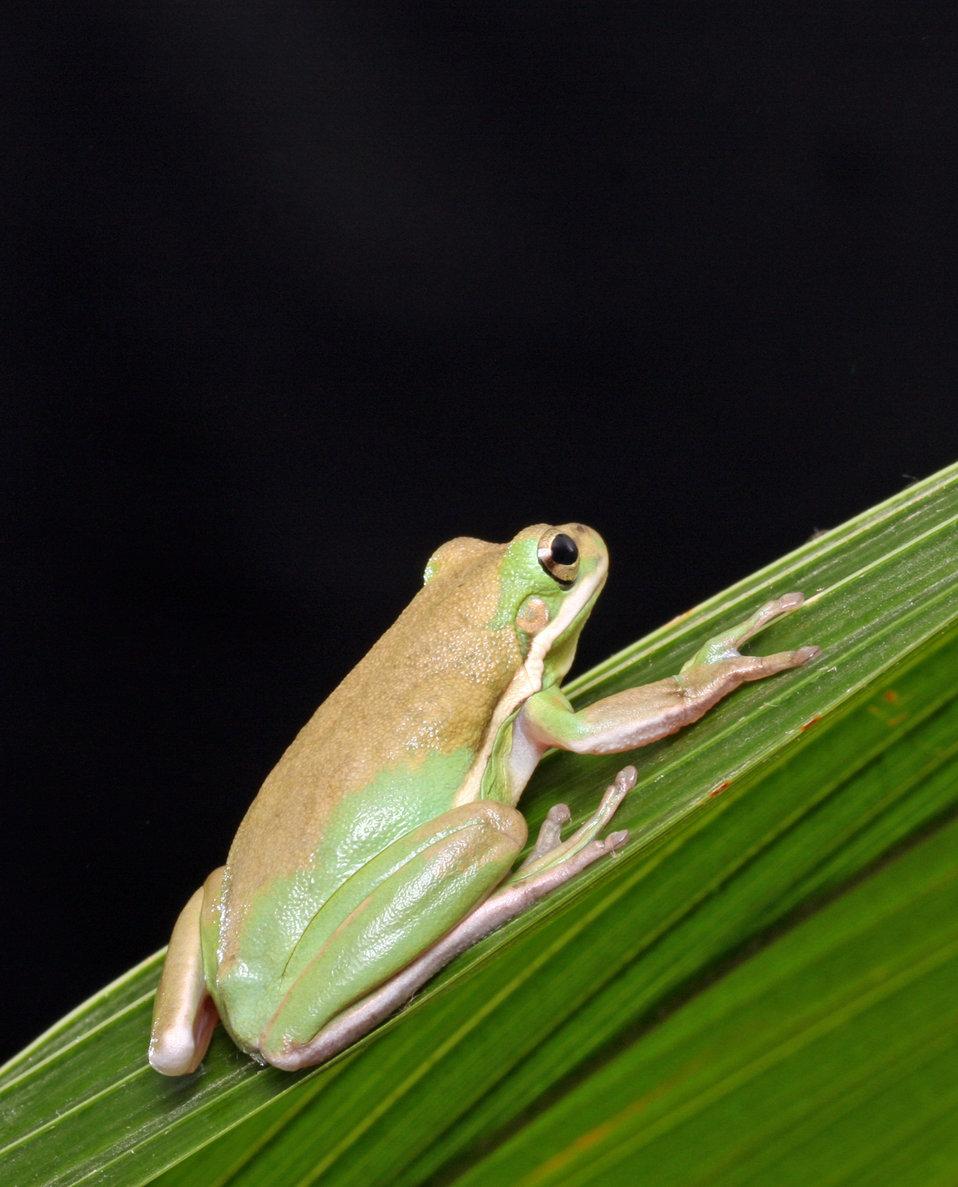 Frog macro portrait